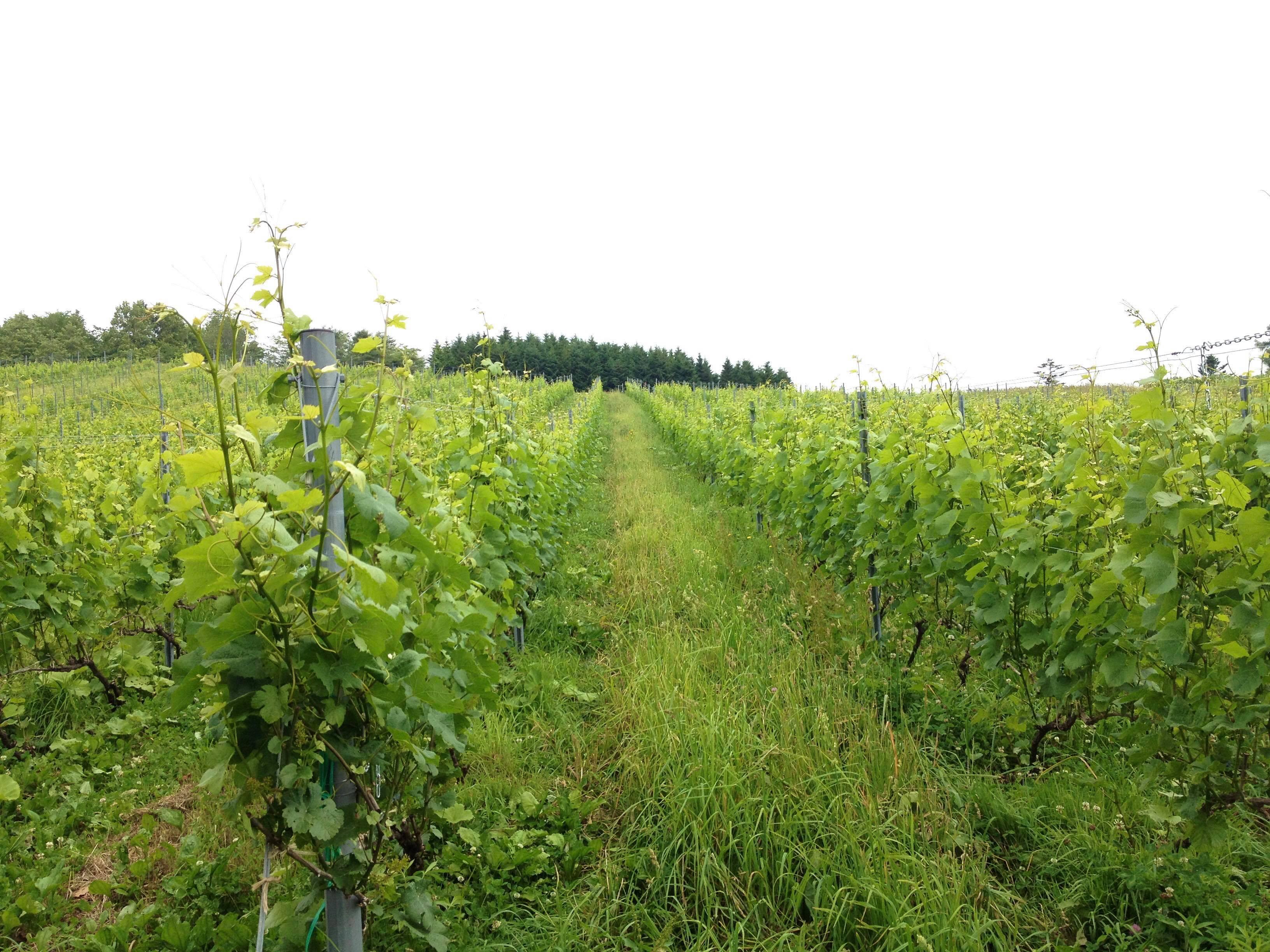 トアール (10R winery)